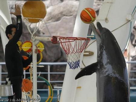 گردشگری کیش,پارک دلفین ها