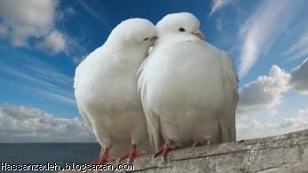 گفتگوی موثر و روابط عاشقانه