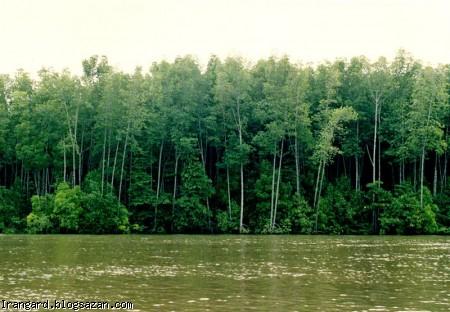 گردشگری قشم,جنگل رویایی حرا,جنگل حرا