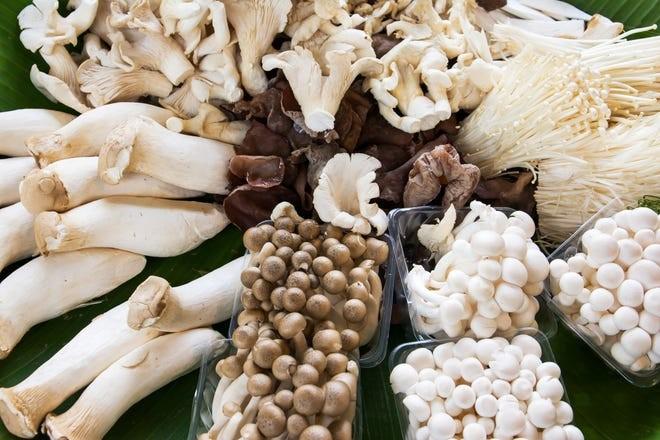 آنچه شما هرگز در مورد قارچ نمی دانستید