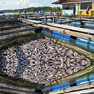 ضدعفونی کردن مزارع پرورش ماهی و اصول بهداشتی آن