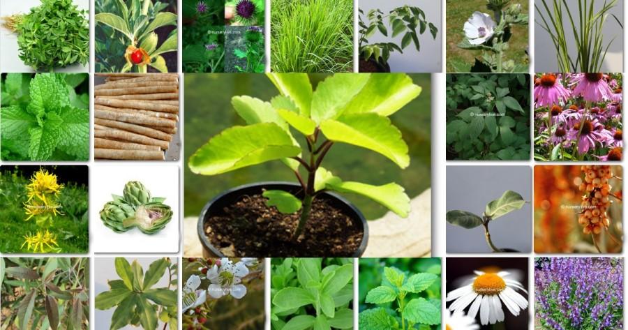 بهترین گیاه دارویی و کاربردهای آنها