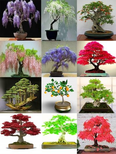 تعریف و معنی · اصول · مراقبت از درخت بونسای