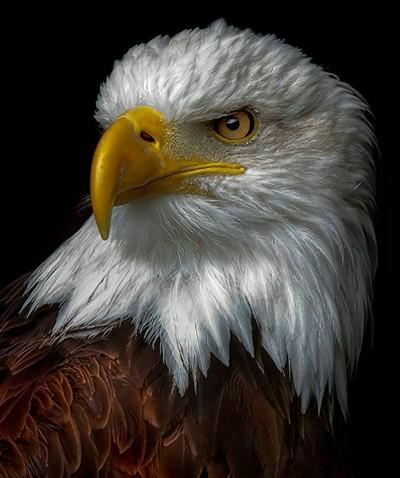 عقاب پیر