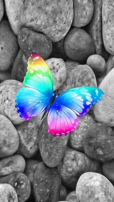 عشق آب و رنگ گلزارِ دل است