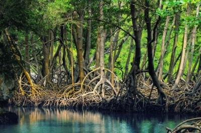 جنگل های حرا - قشم
