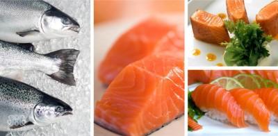 مهمترین تفاوت های ماهی سالمون و قزل آلا