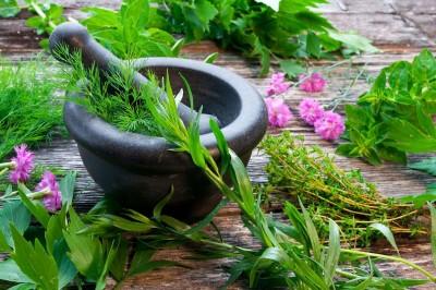 گیاهان دارویی سنتی: روایات دیروز و داروهای فردا