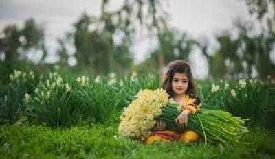 گل نرگس بهبهان [آپدیت شد]