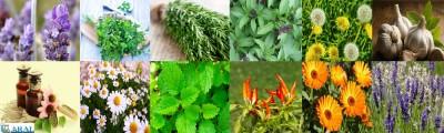 انواع گیاهان دارویی و پرورش آن در منرل