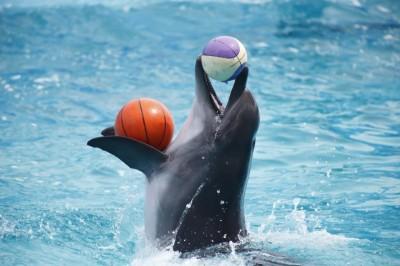 معرفی پارک دلفین کیش
