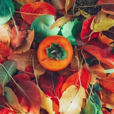 عاشق که نباشی، پاییز، وصلهی ناجور فصلهاست...